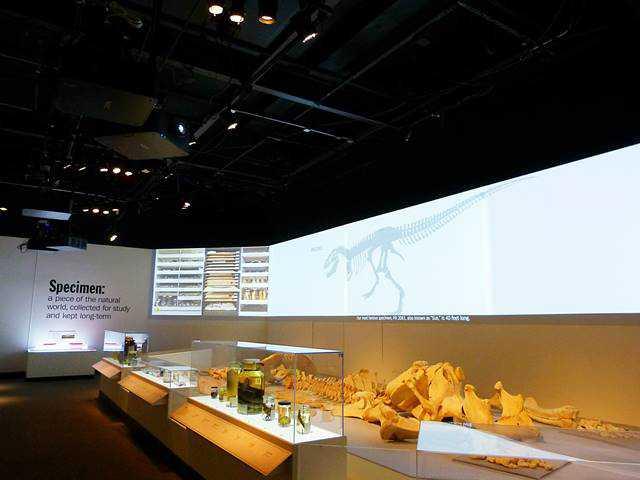 Field Museum (40)