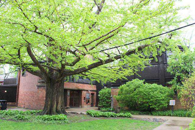 Frank Lloyd Wright Oak Park (2)
