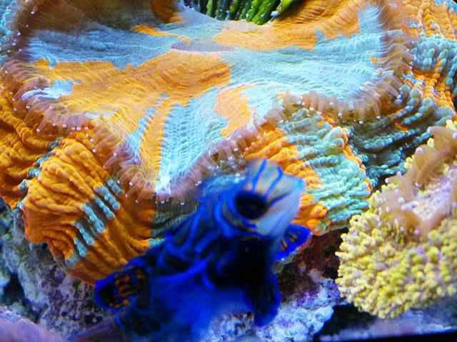 Shedd Aquarium (11)