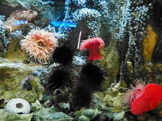 Shedd Aquarium (13)
