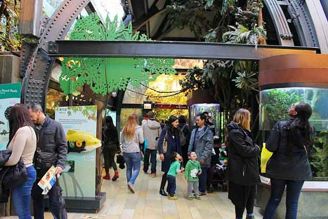 Shedd Aquarium (2)