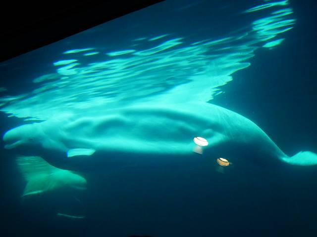 Shedd Aquarium (21)