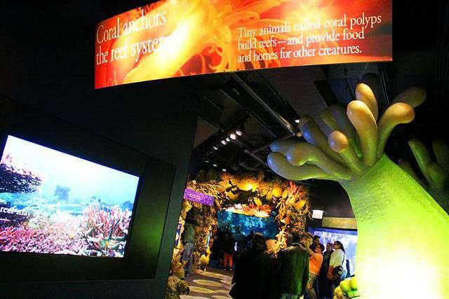 Shedd Aquarium (3)