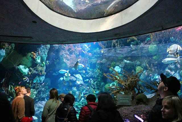 Shedd Aquarium (4)