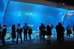 Shedd Aquarium (5)