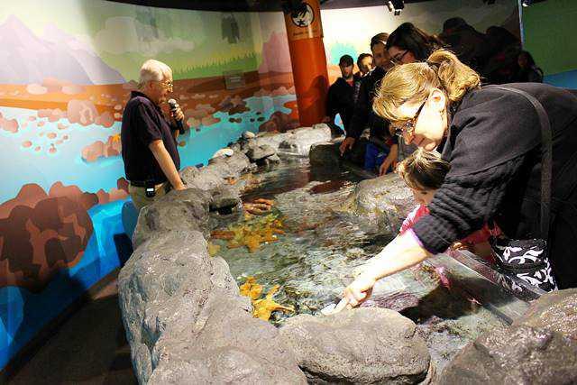 Shedd Aquarium (6)
