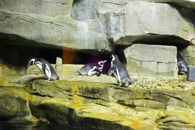 Shedd Aquarium (7)