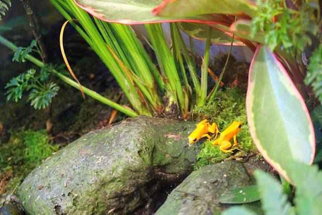 Shedd Aquarium (8)