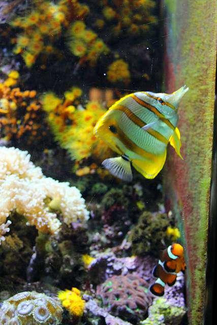 Shedd Aquarium (9)