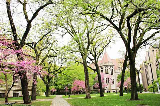 University of Chicago (11)