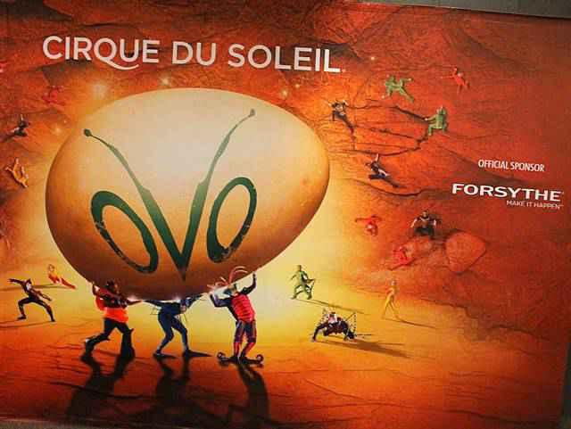 Cirque du Soleil OVO (6)