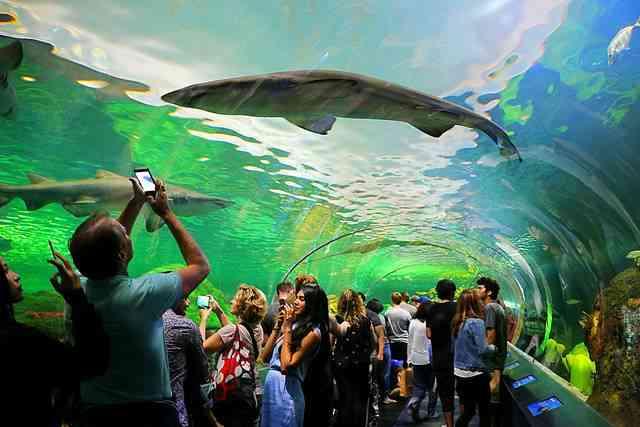 Aquarium of Canada (1)