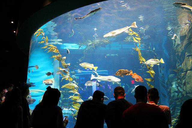 Aquarium of Canada (13)