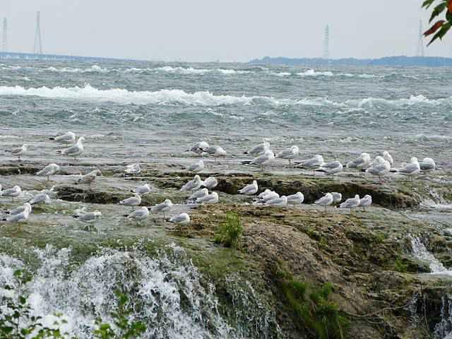 Niagara Falls NY (9)