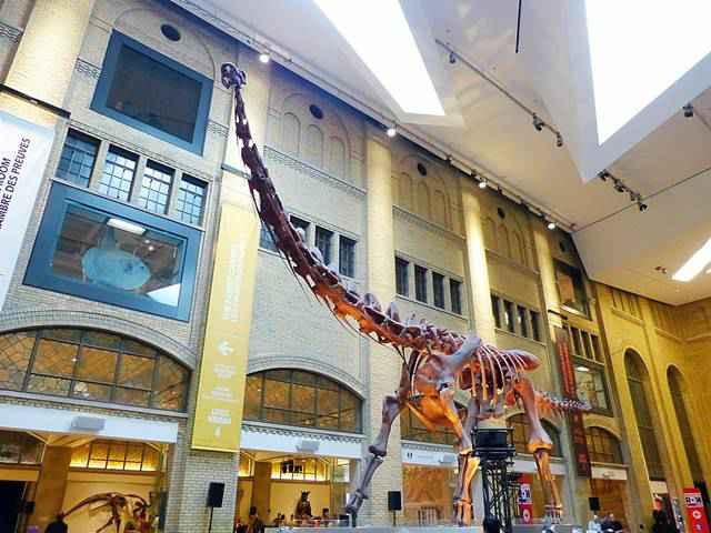 Royal Ontario Museum (1)