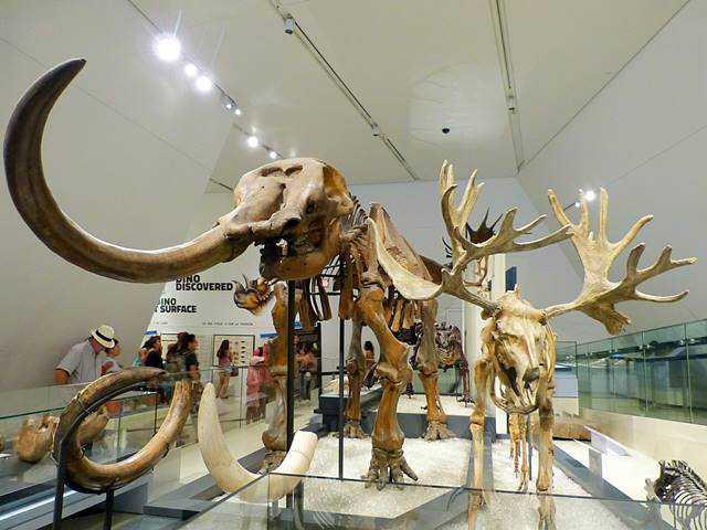 Royal Ontario Museum (14)