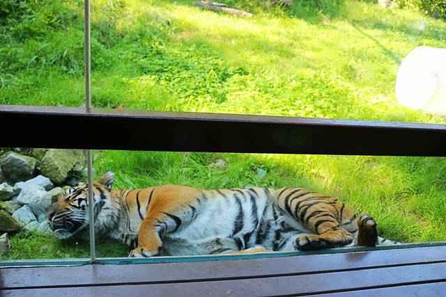 Toronto Zoo (16)