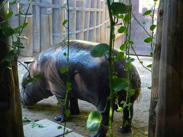 Toronto Zoo (19)