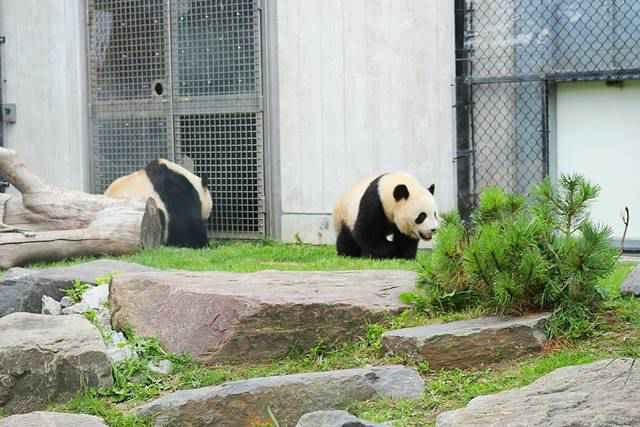 Toronto Zoo (2)