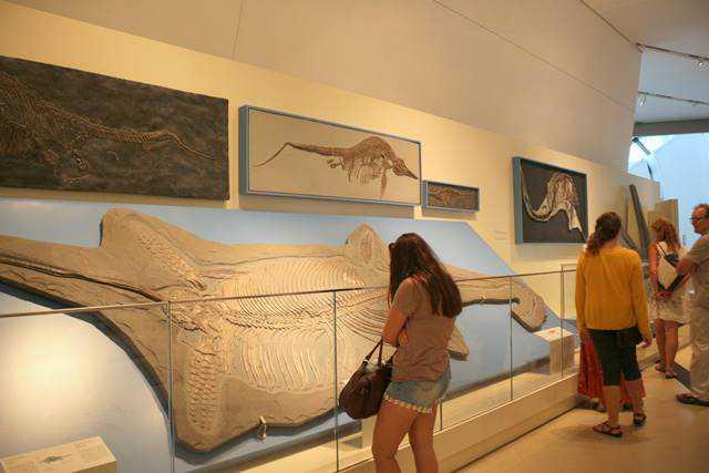 Royal Ontario Museum (19)