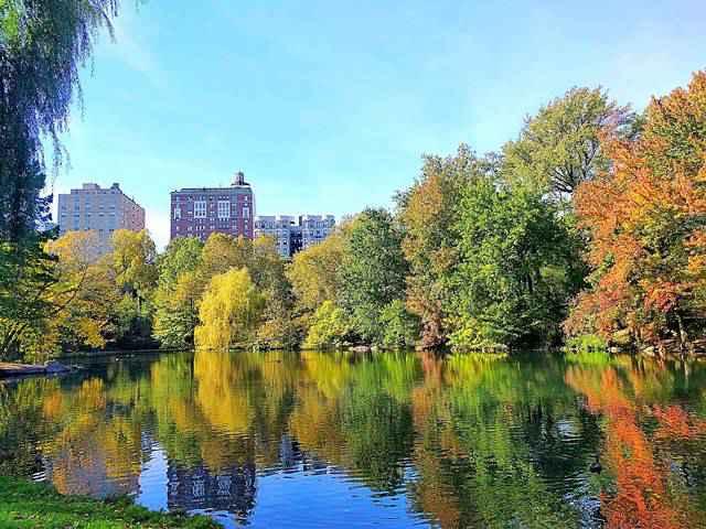 Central Park Foliage (1)
