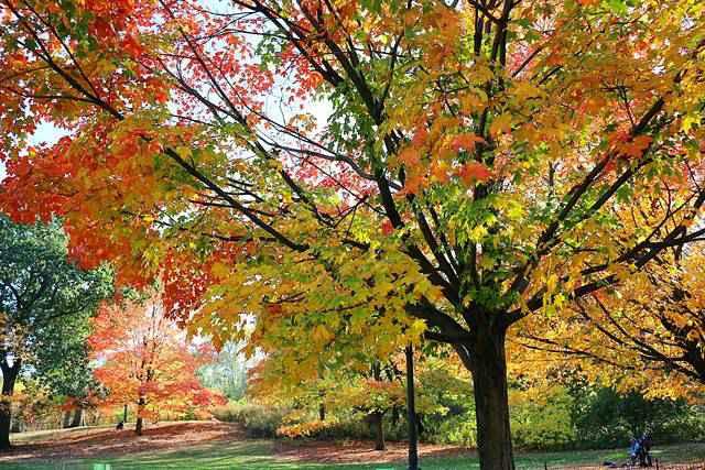 Central Park Foliage (3)