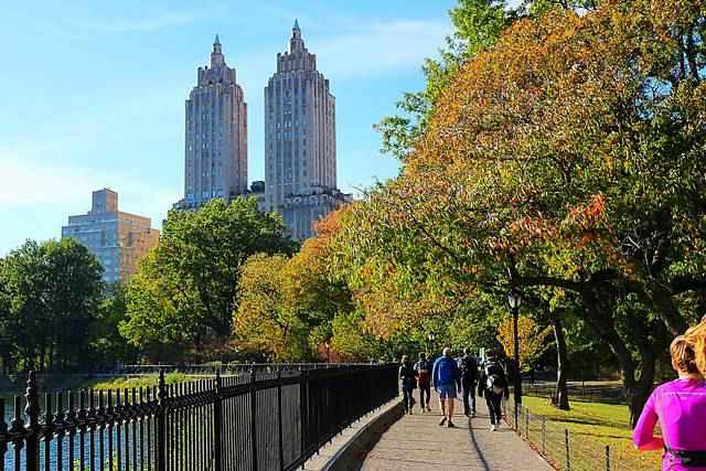 Central Park Foliage (4)