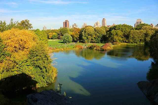 Central Park Foliage (5)