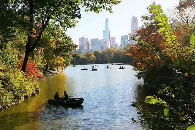 Central Park Foliage (6)