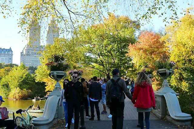 Central Park Foliage (7)