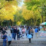 Central Park Foliage (9)
