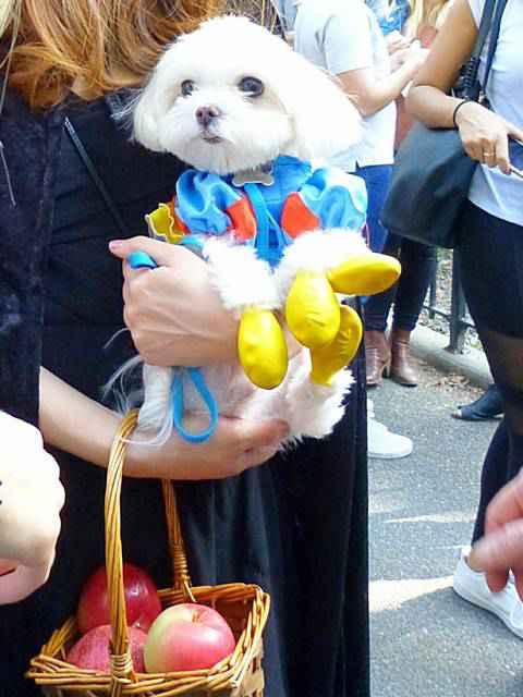 Halloween Dog Parade NYC (10)