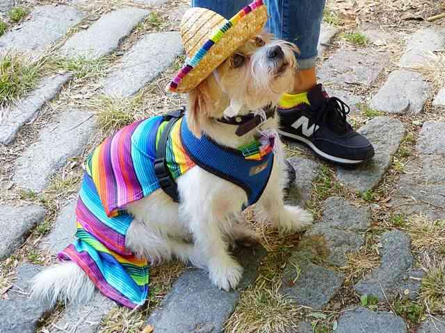 Halloween Dog Parade NYC (11)