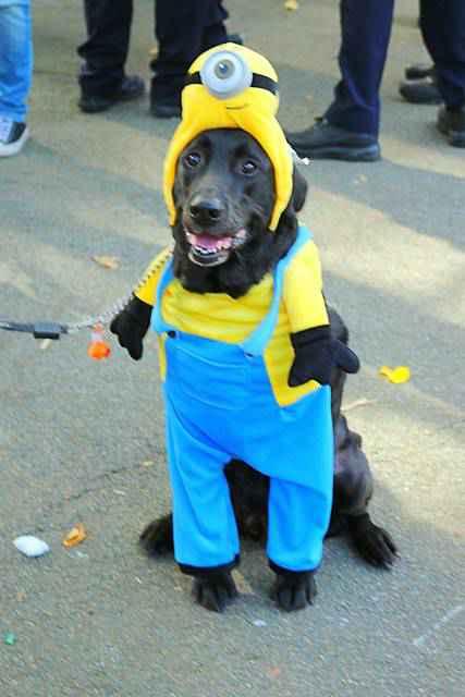 Halloween Dog Parade NYC (12)