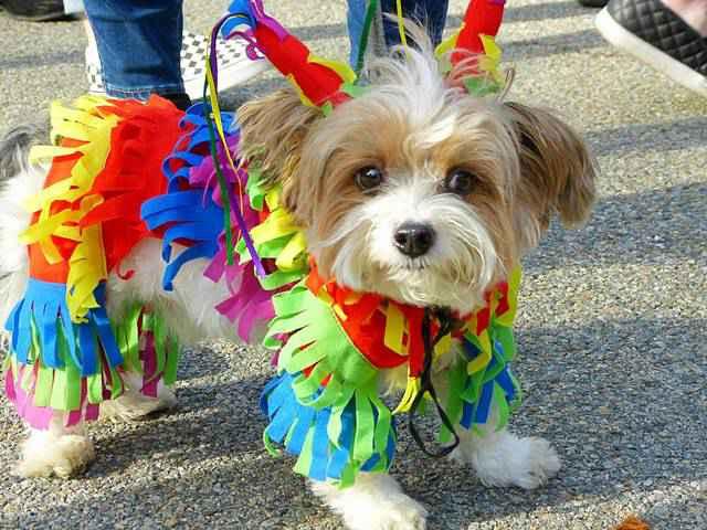 Halloween Dog Parade NYC (13)