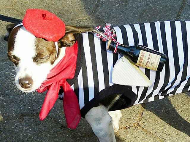 Halloween Dog Parade NYC (14)