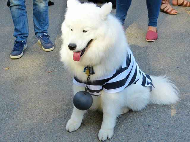 Halloween Dog Parade NYC (16)