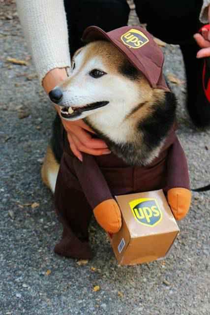 Halloween Dog Parade NYC (18)