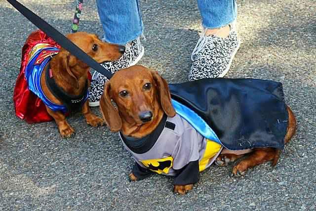 Halloween Dog Parade NYC (19)