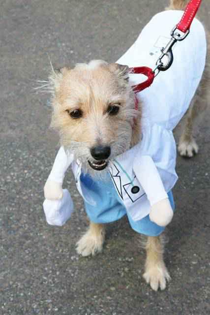 Halloween Dog Parade NYC (2)