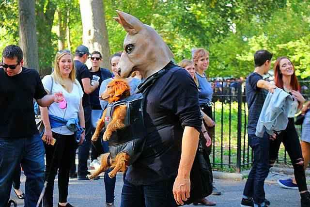 Halloween Dog Parade NYC (5)