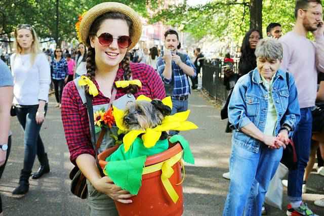 Halloween Dog Parade NYC (6)