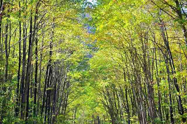 Jacques-Cartier National Park (2)