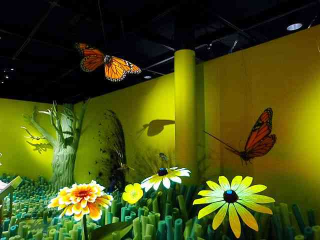 American Museum of Natural History – Our Senses (16)