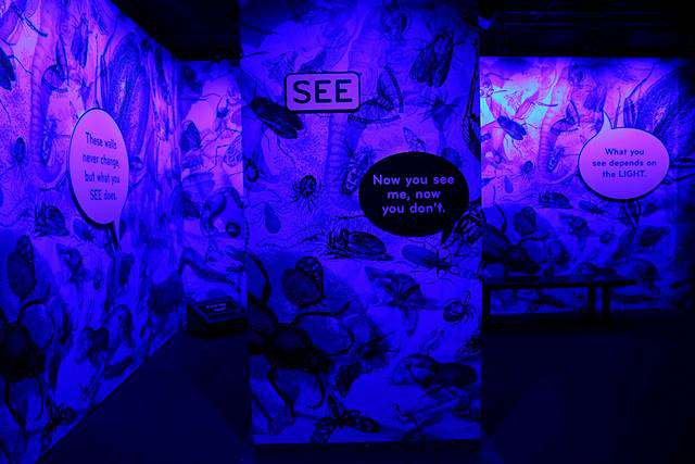 American Museum of Natural History – Our Senses (8)