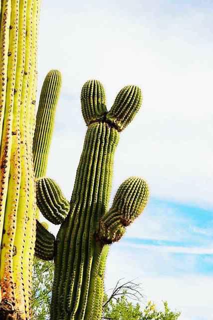 Arizona (4)