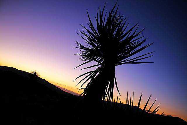 Arizona (5)