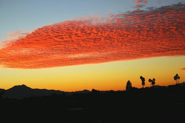 Arizona (7)
