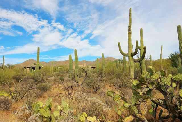 Arizona-Sonora Desert Museum (4)