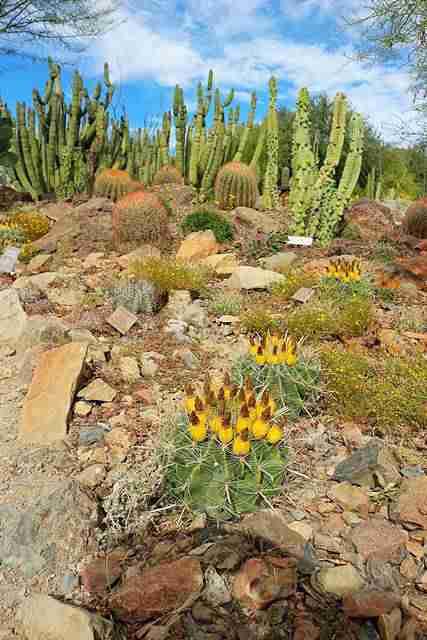 Arizona-Sonora Desert Museum (5)